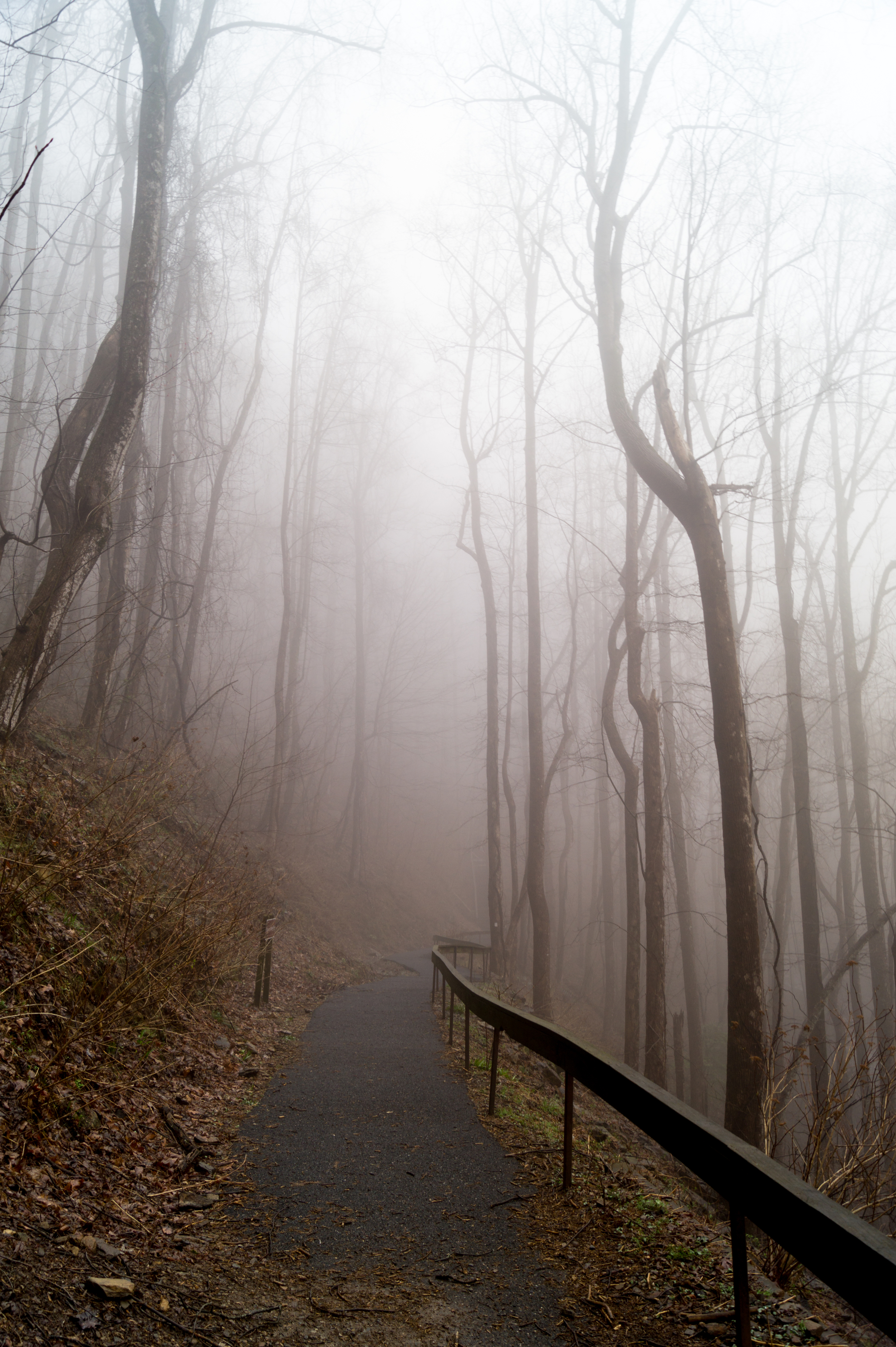 It was really foggy there through mid-morning for the hikers.
