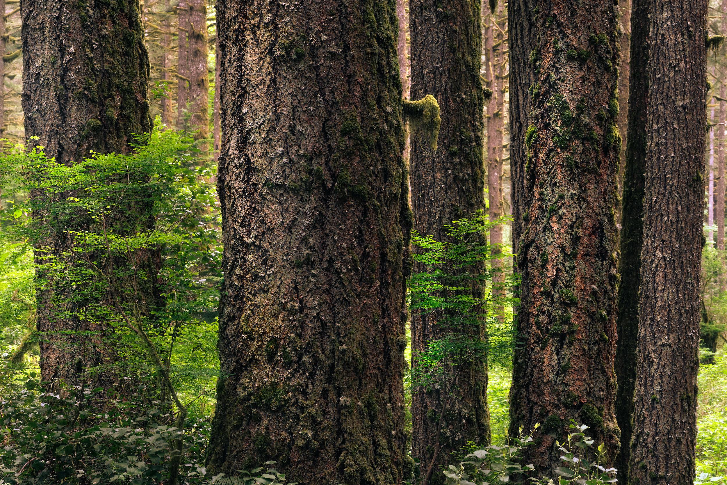 Tree Posey