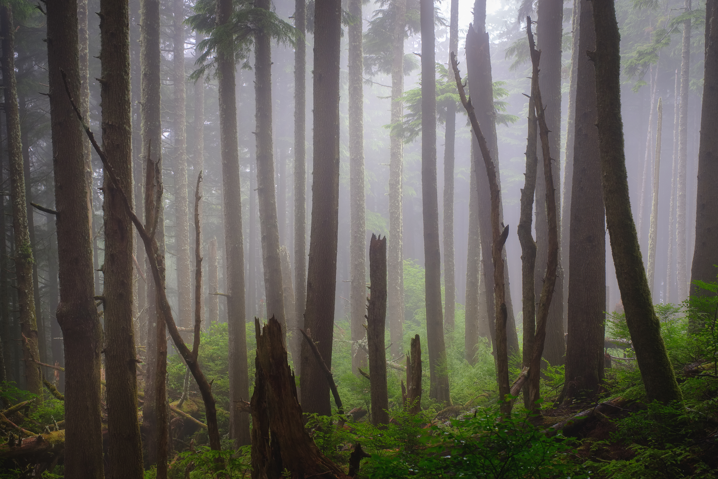 A forest on the Oregon coast in August this year after deciding to go out when I noticed the conditions might work out in this location!