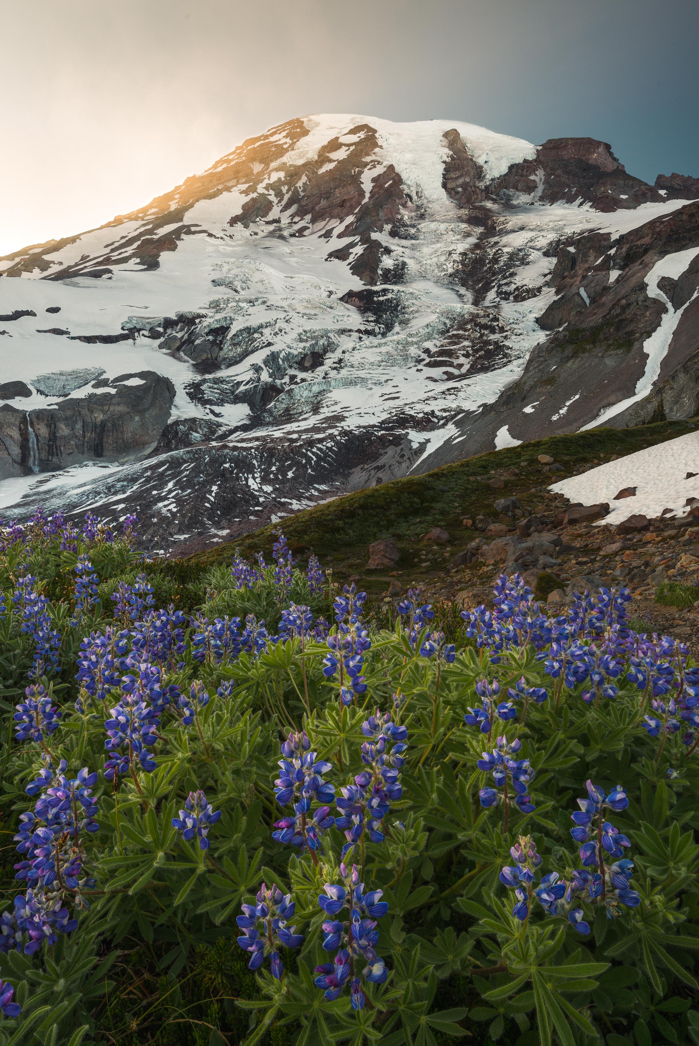 mt rainier national park spring wildflowers summer august