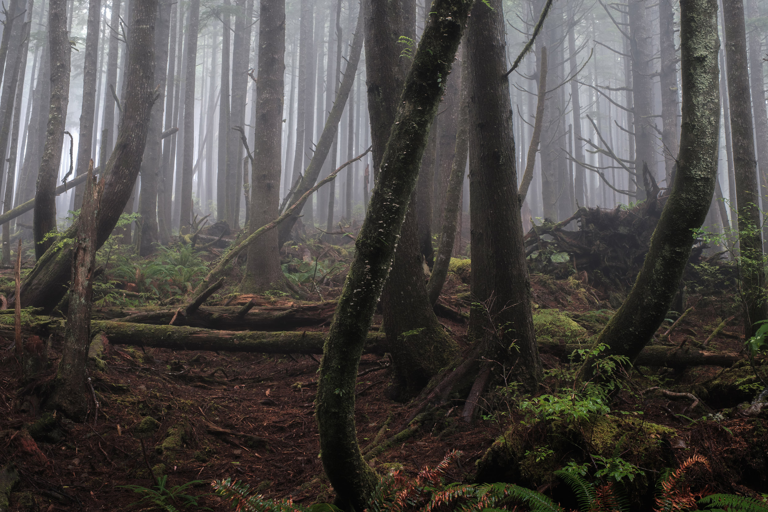 A real foggy forest image not done with the use of a fog machine!