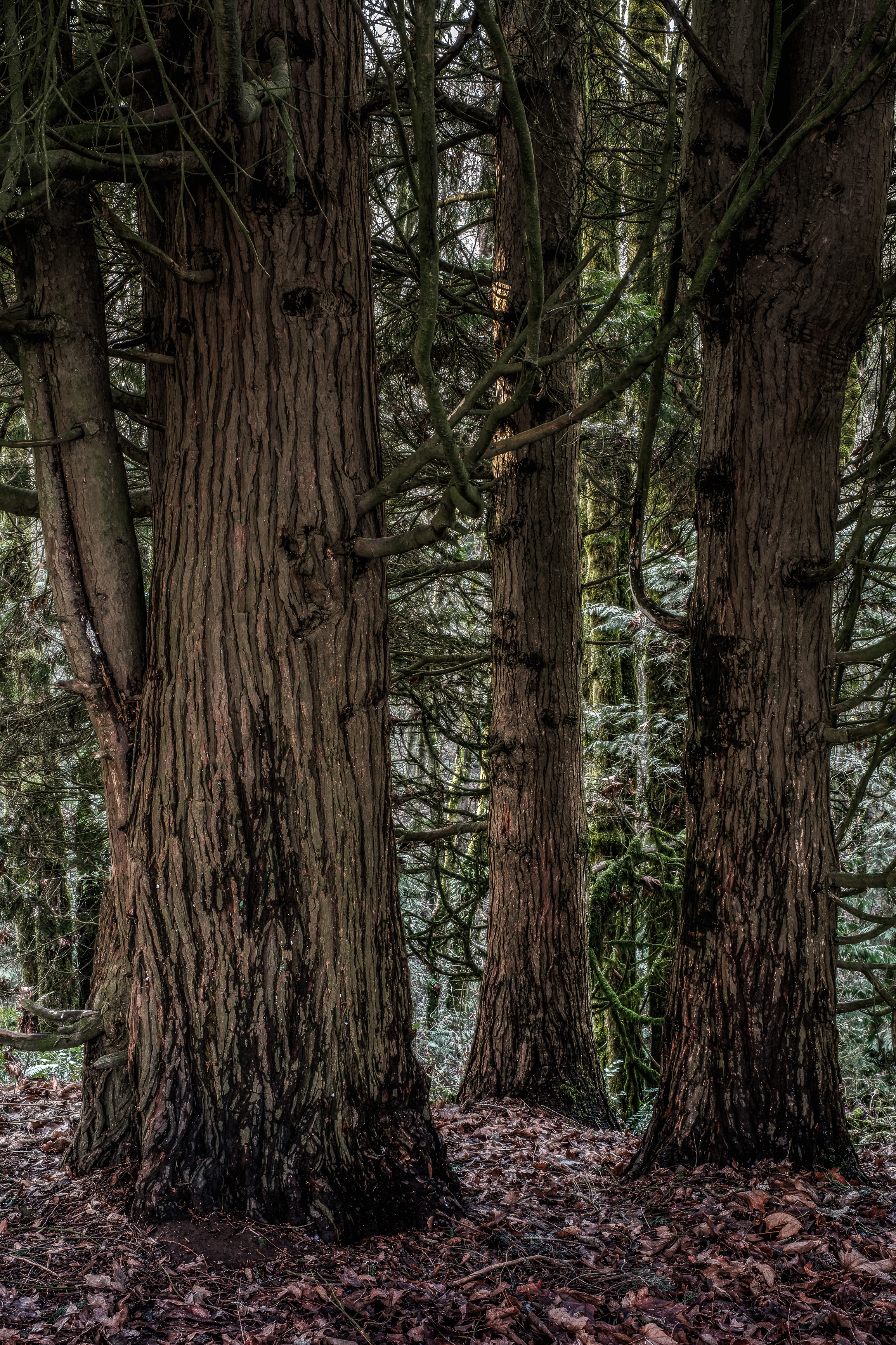 Portland Forest Online-3.jpg