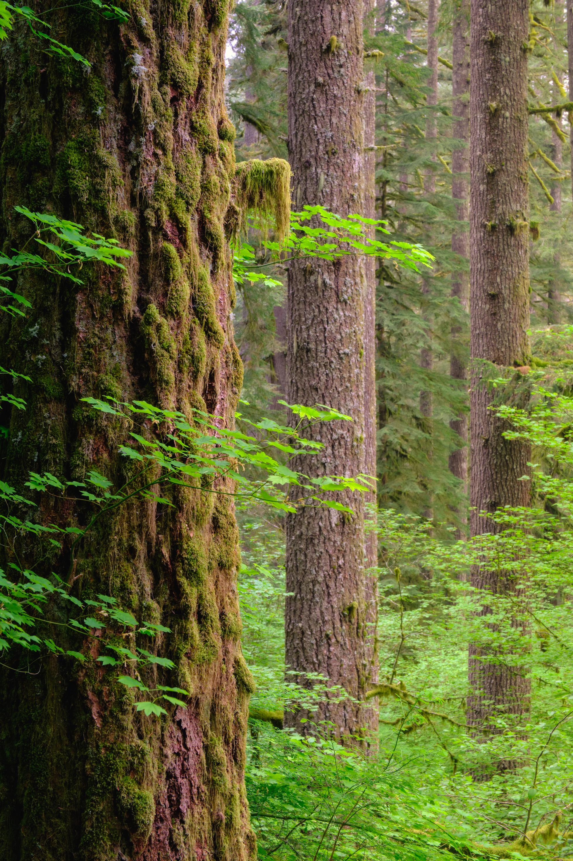 Forest Service-3 copy.jpg