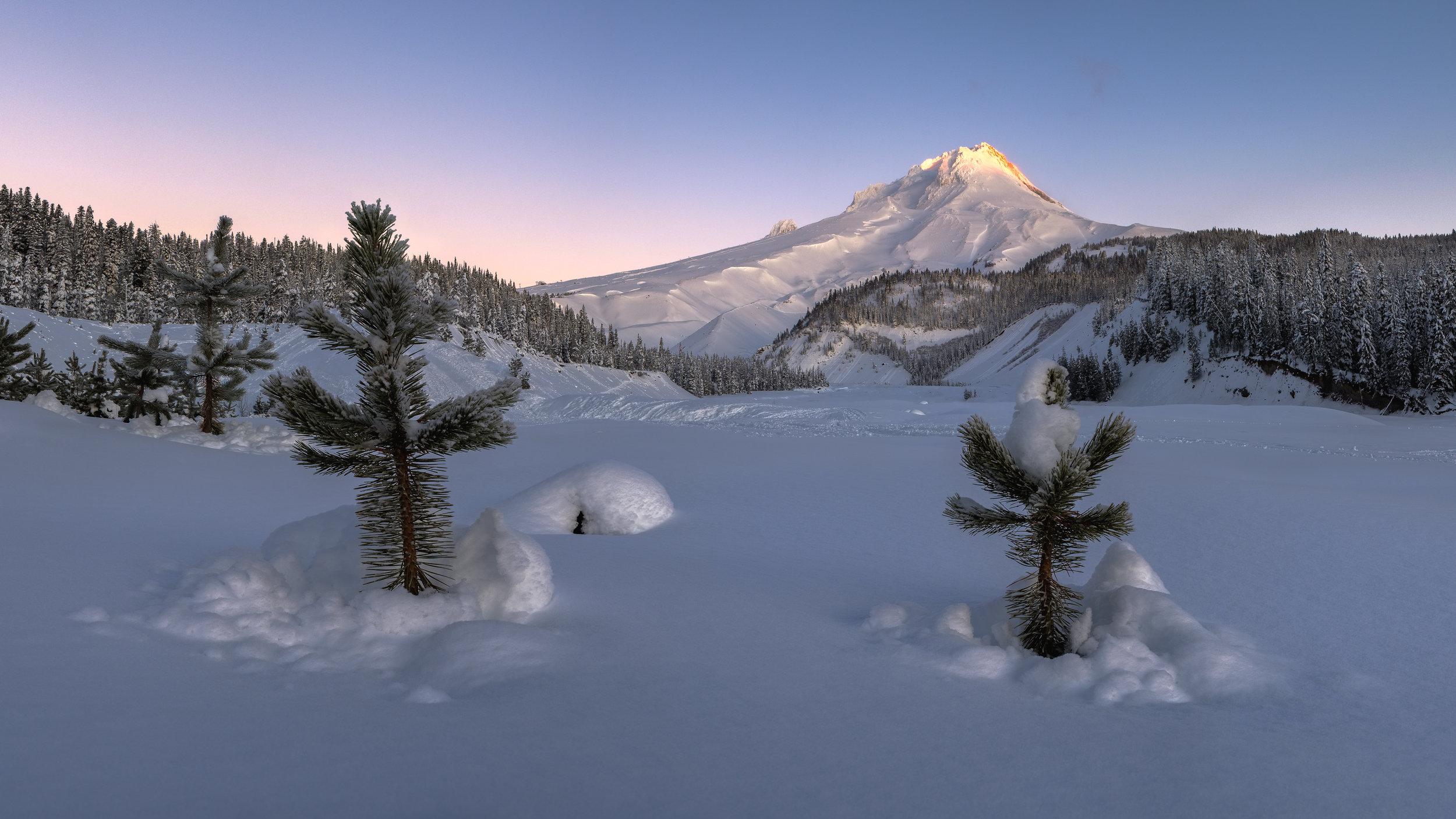 Mt. Hood sunrise trees and snow