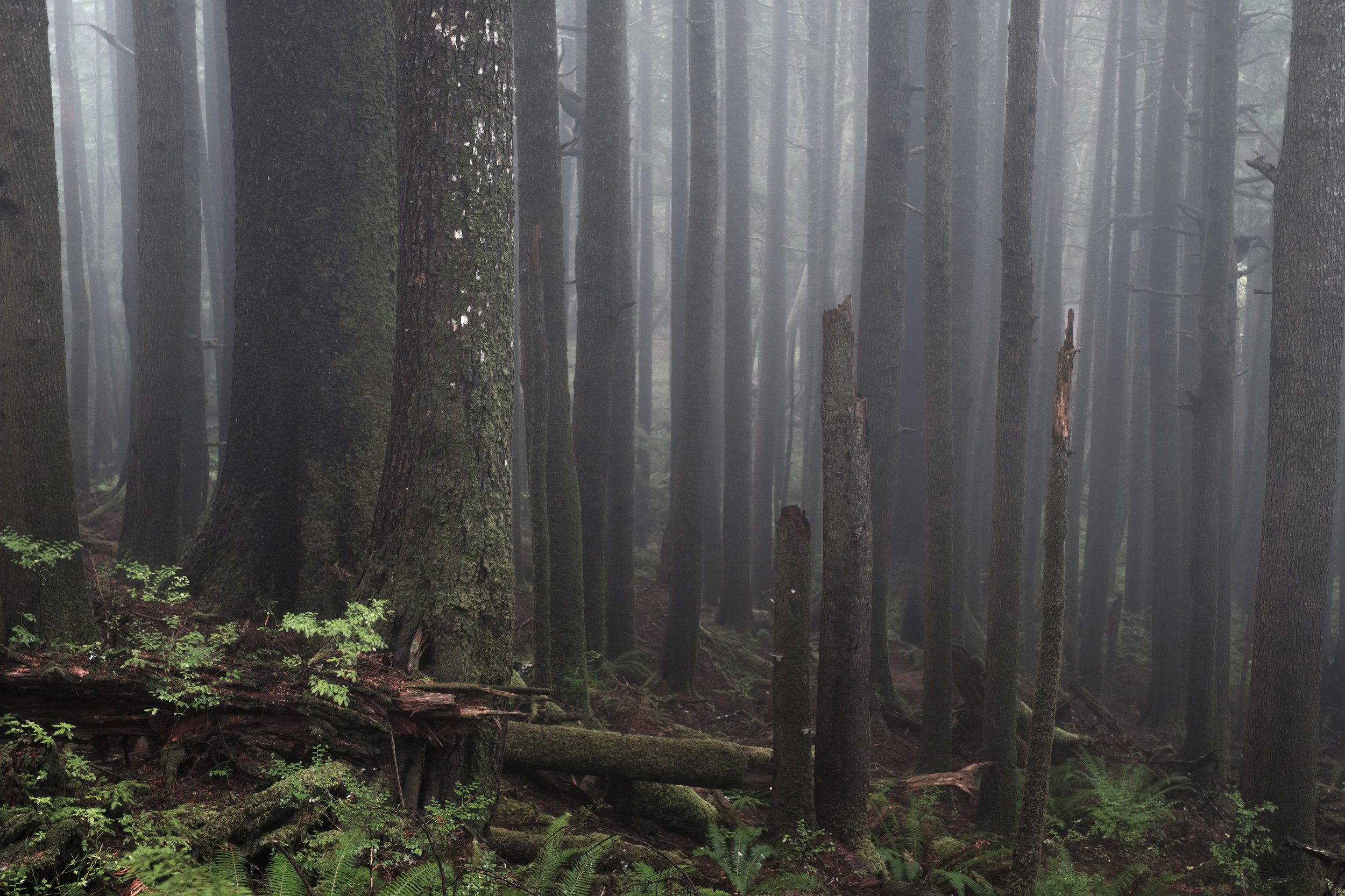 Foggy forest photo