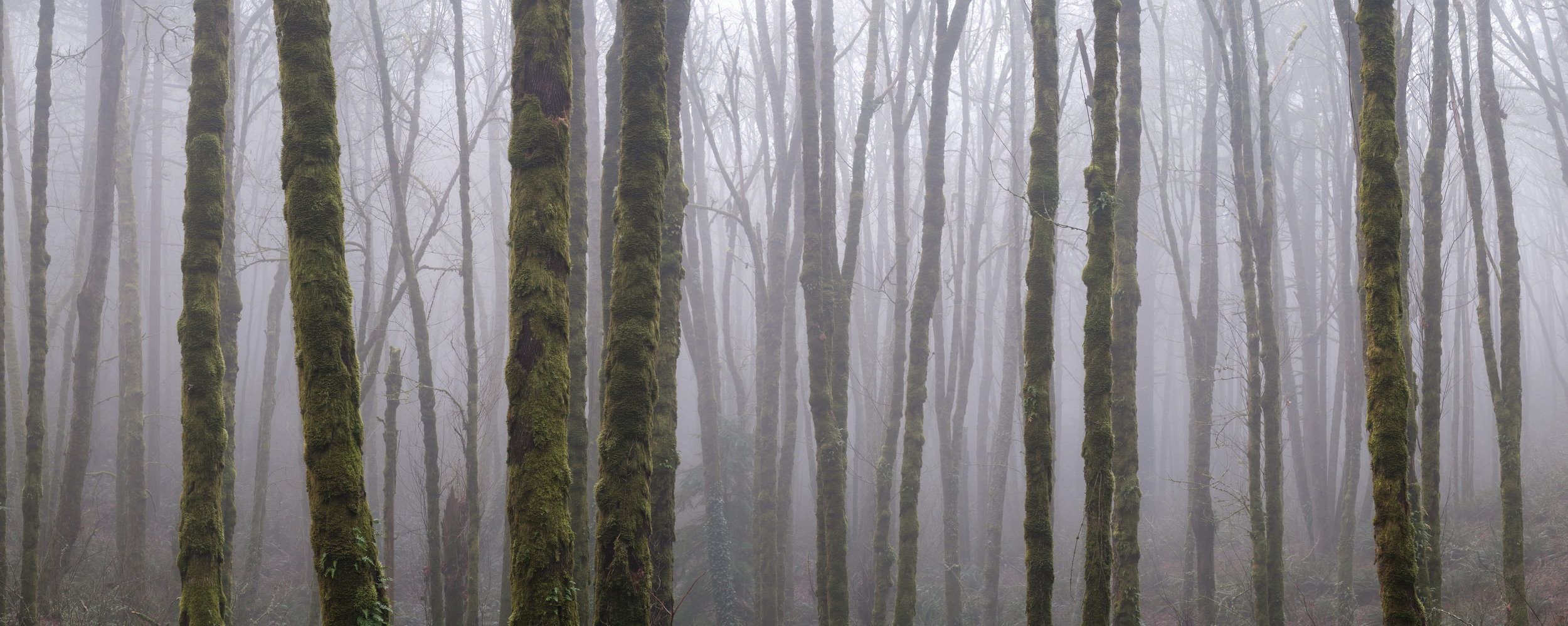The fog rolled in and during a dense fog advisory I shot this image I had been waiting for
