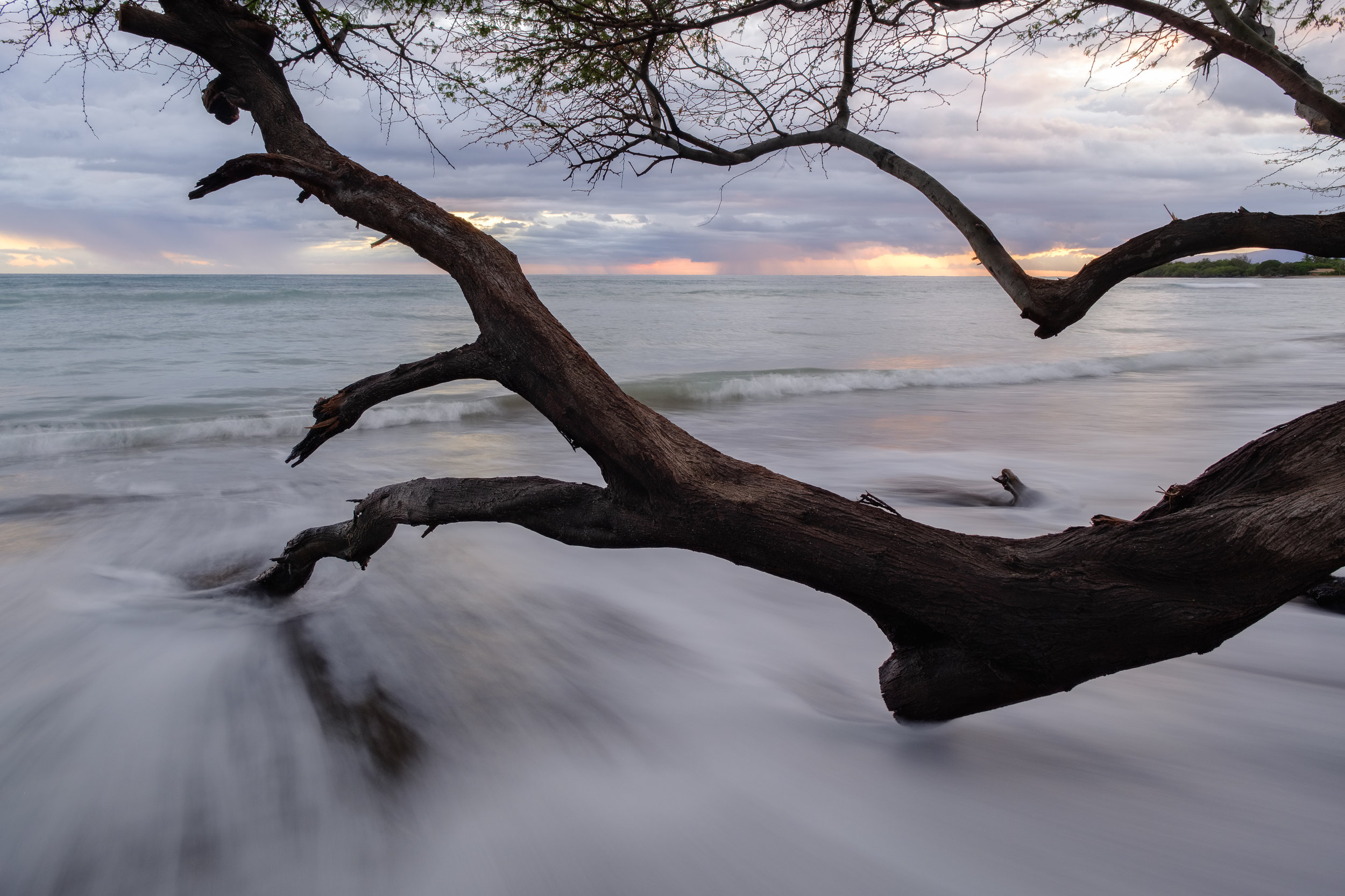 tree in ocean sunset