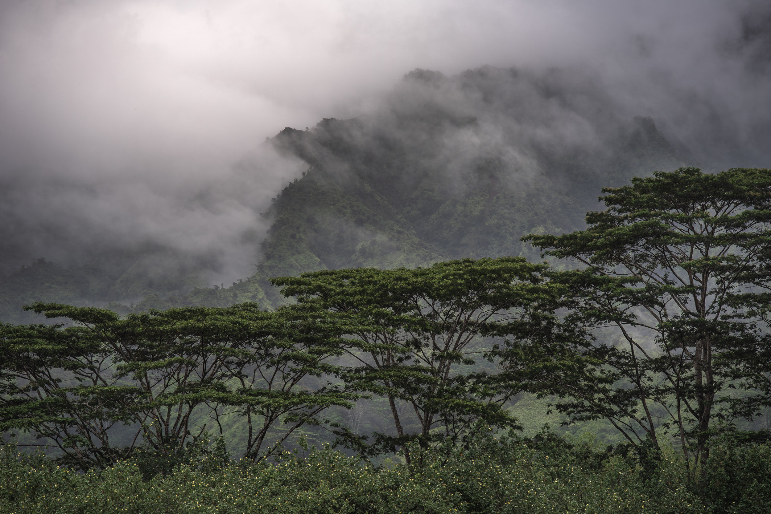 jurassic kauai mountains trees landscape