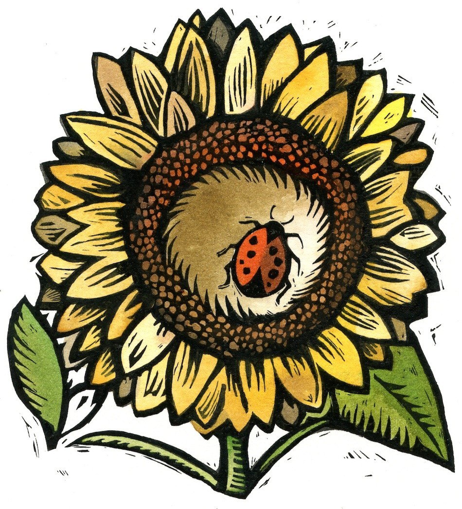 Editorial and Spot Illustration  ( Sunflower)