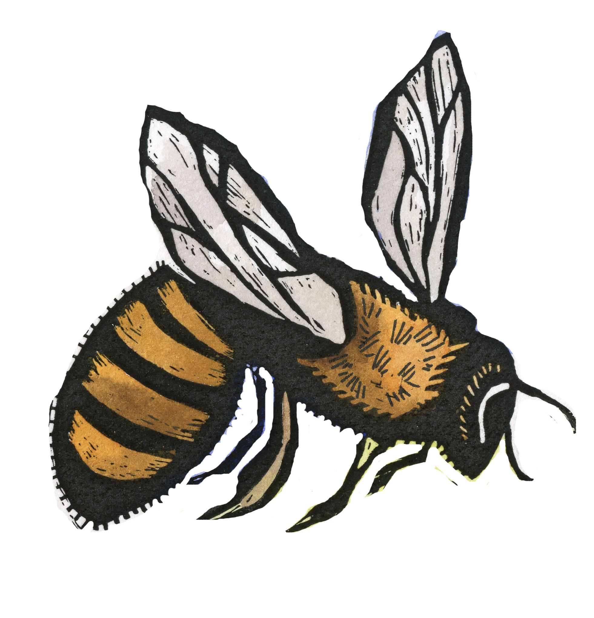 bee for bookmark.jpg