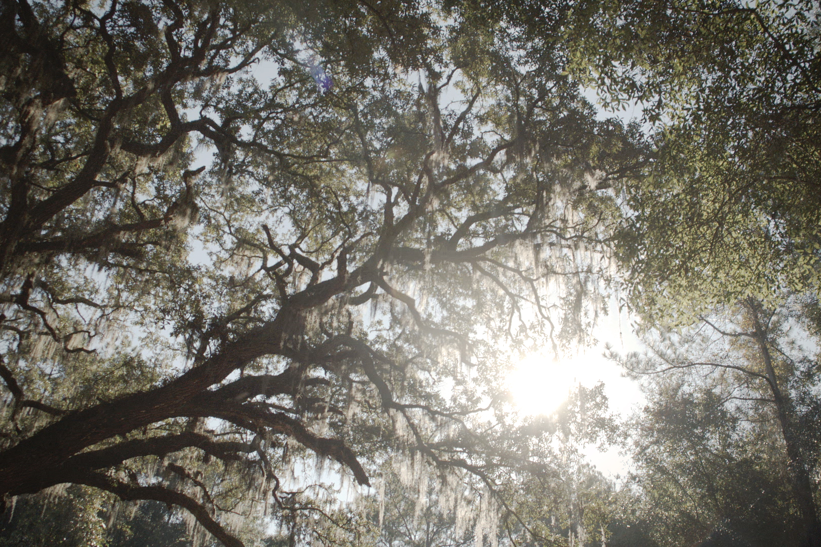 Screen Shot 2014-12-18 at 5.17.25 PM.jpg