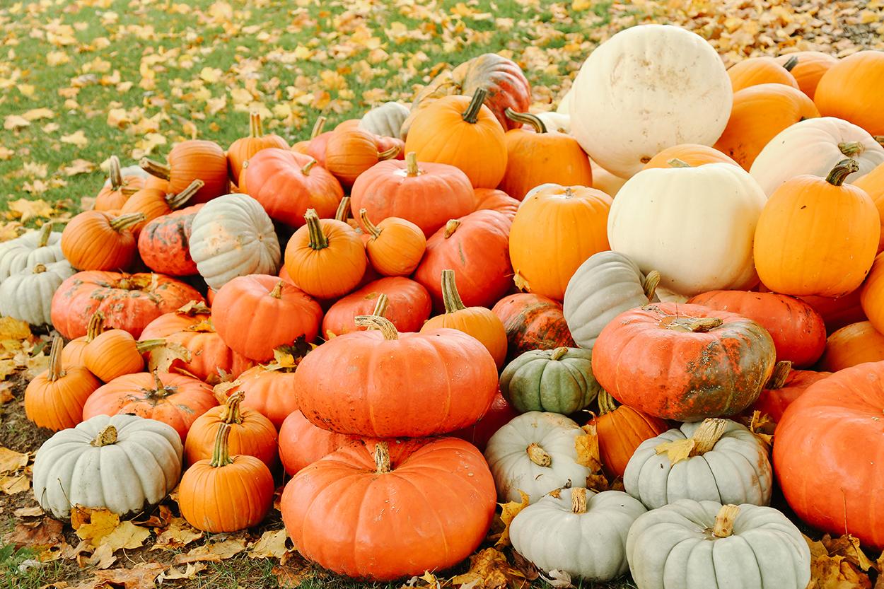 pumpkins photo 1.jpg