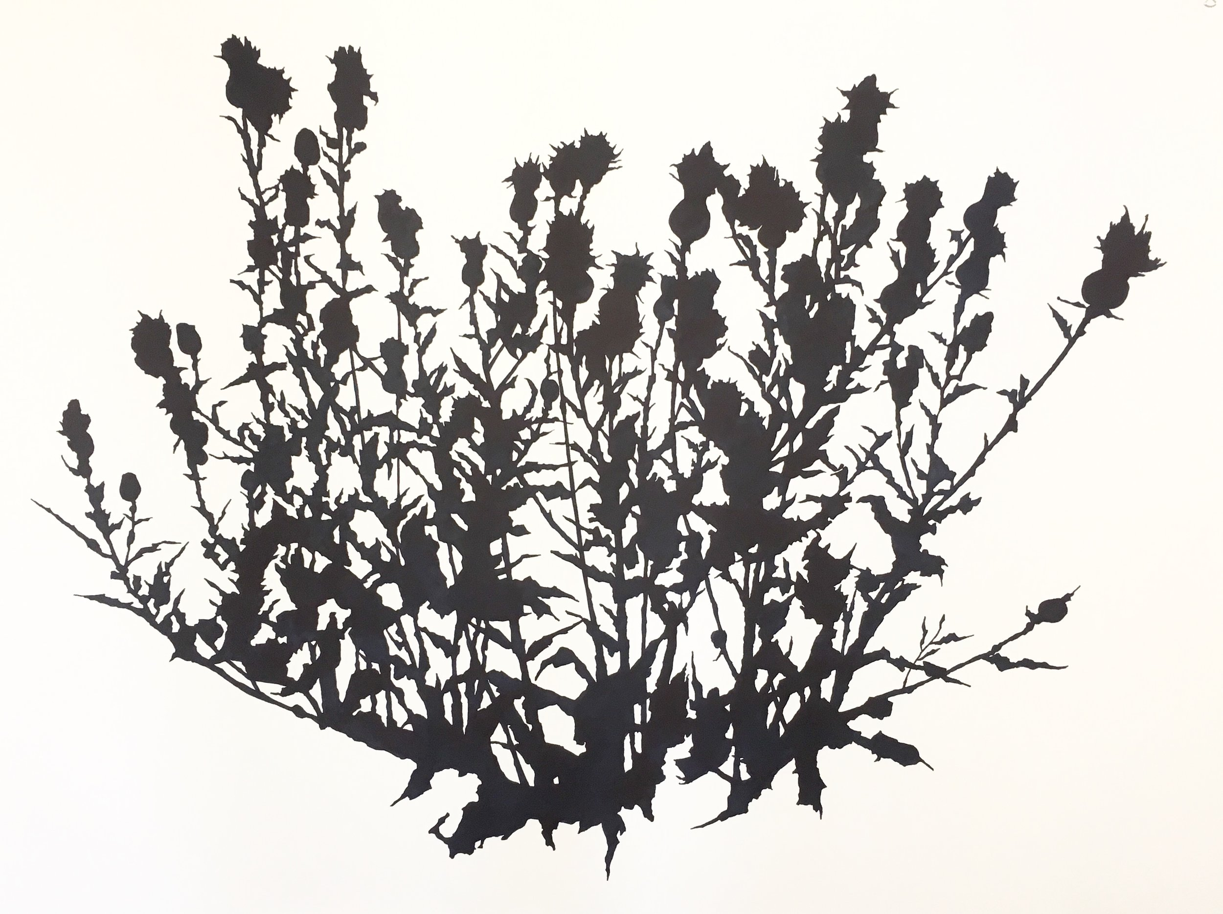 Large Thistle Study (September), Matfield Green , ink on paper, 38 x 50