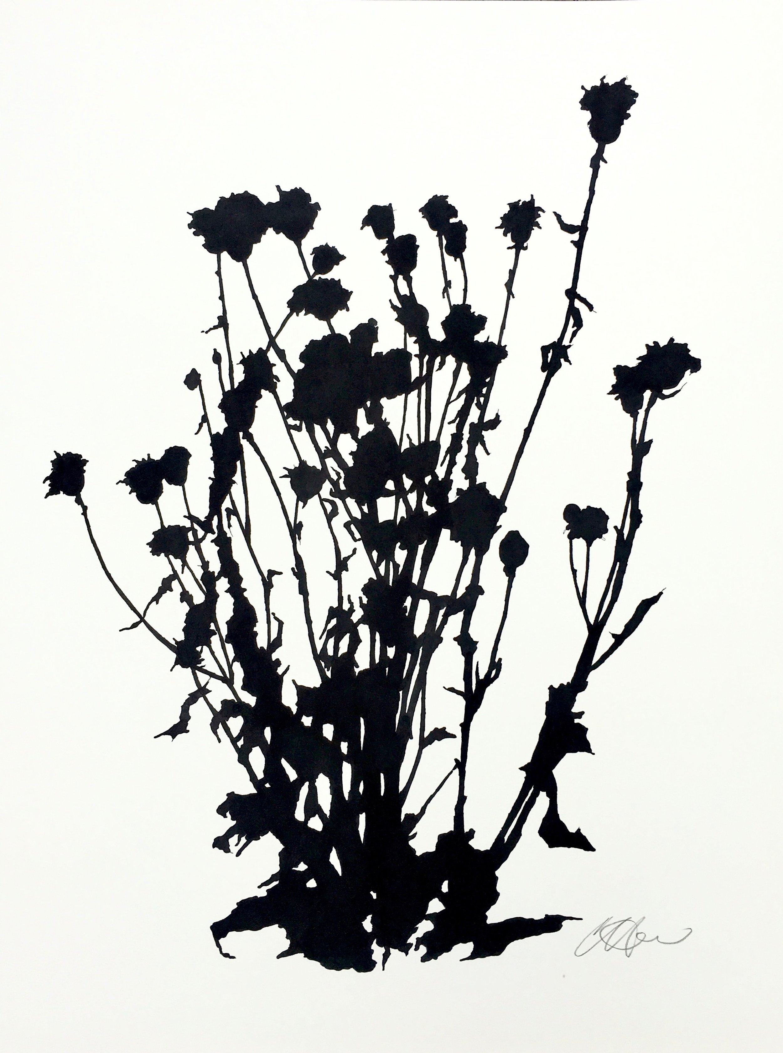 """Dead Thistle Study (1), April, The Little,  ink on paper, 24 x 18"""""""