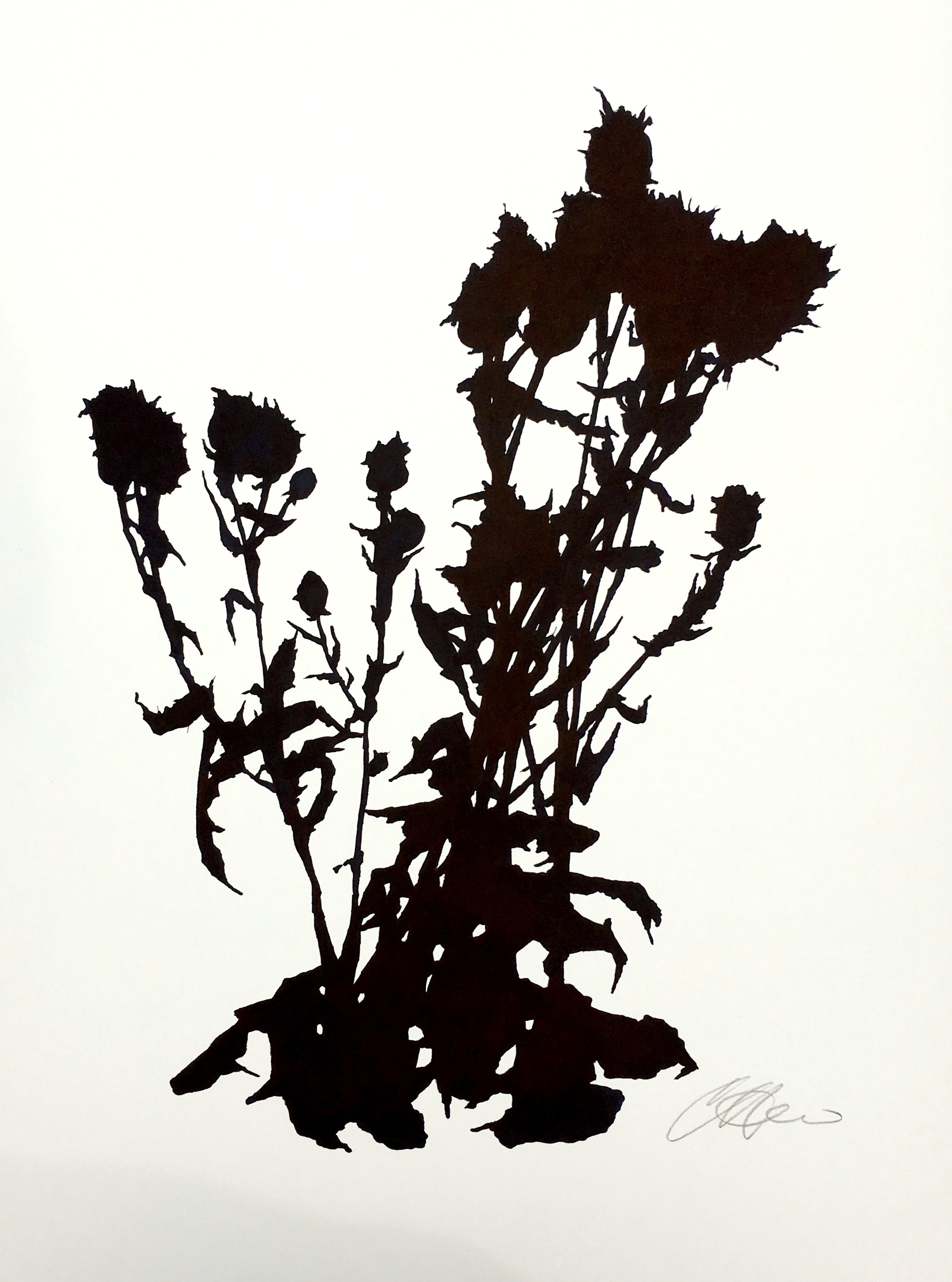"""Dead Thistle Study (2), April, The Little, ink on paper, 24 x 18"""""""