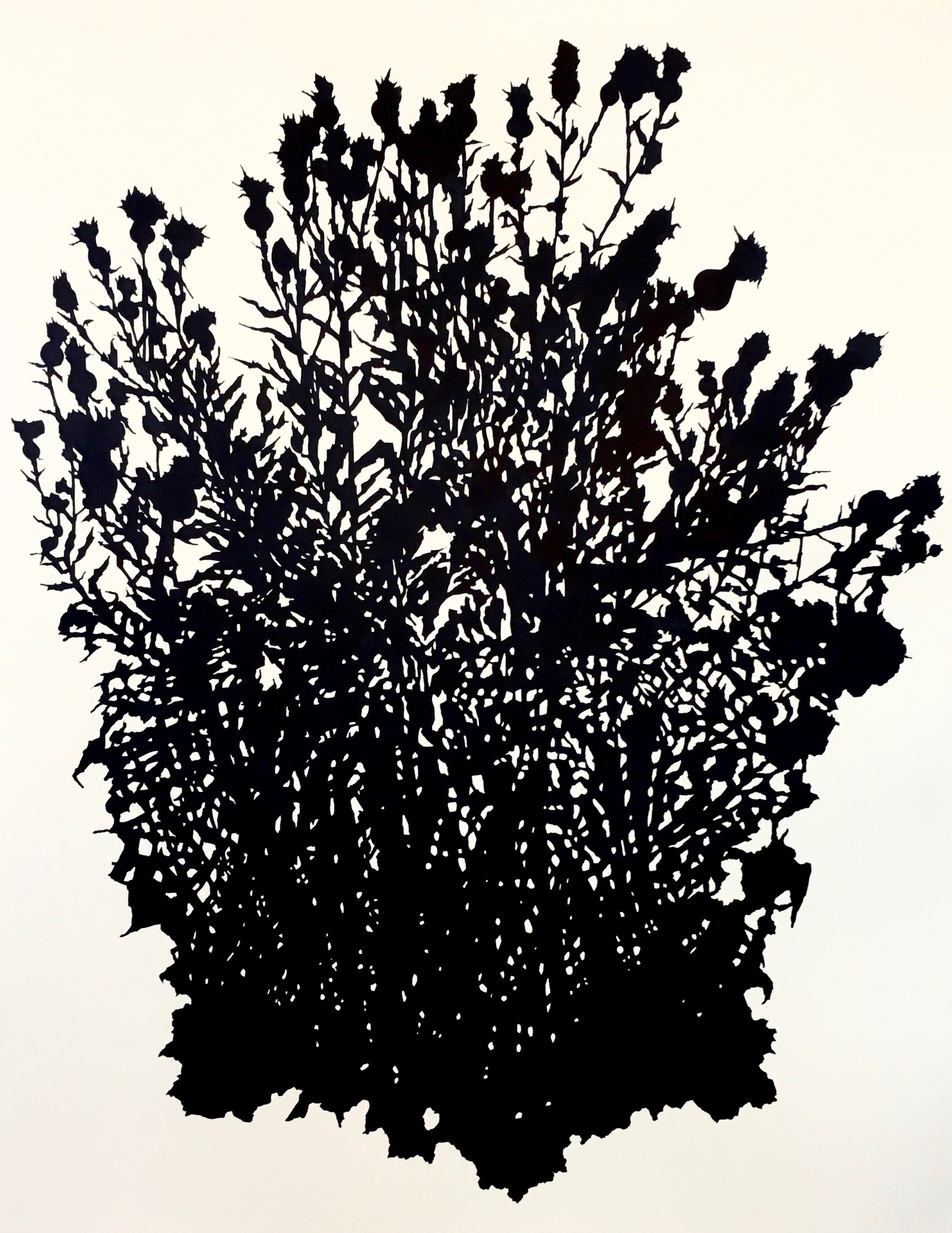 """Thistle Study (October),Matfield Green, KS , ink on paper, 50 x 38"""""""