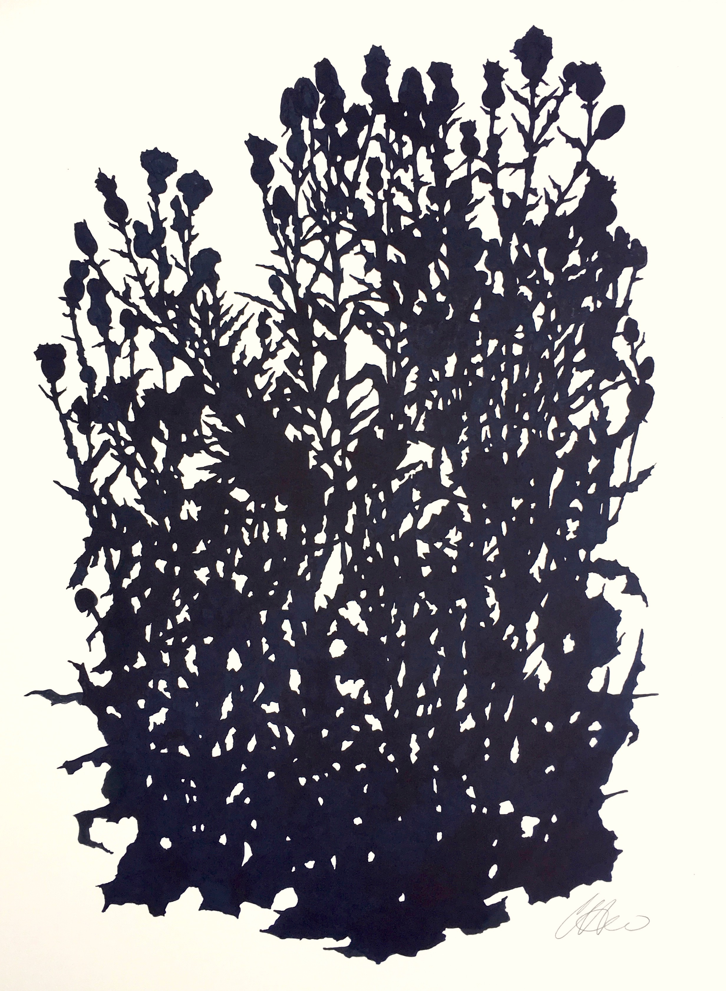 Thistle Study, Matfield Green 2 (August), ink on paper, 30 x 22.5""