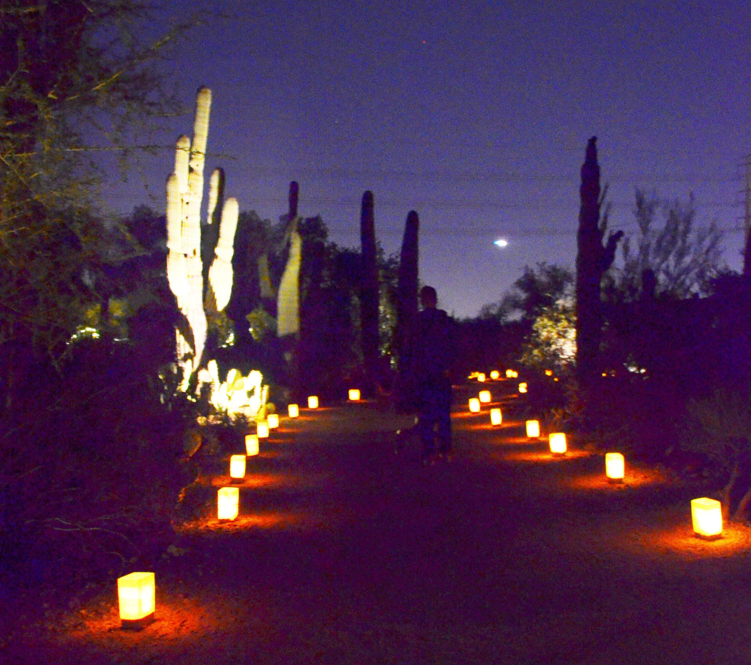 Las Noches de las luminarias at The Desert Botanical Gardens   Momma Society-The Community of Modern Moms   www.MommaSociety.com