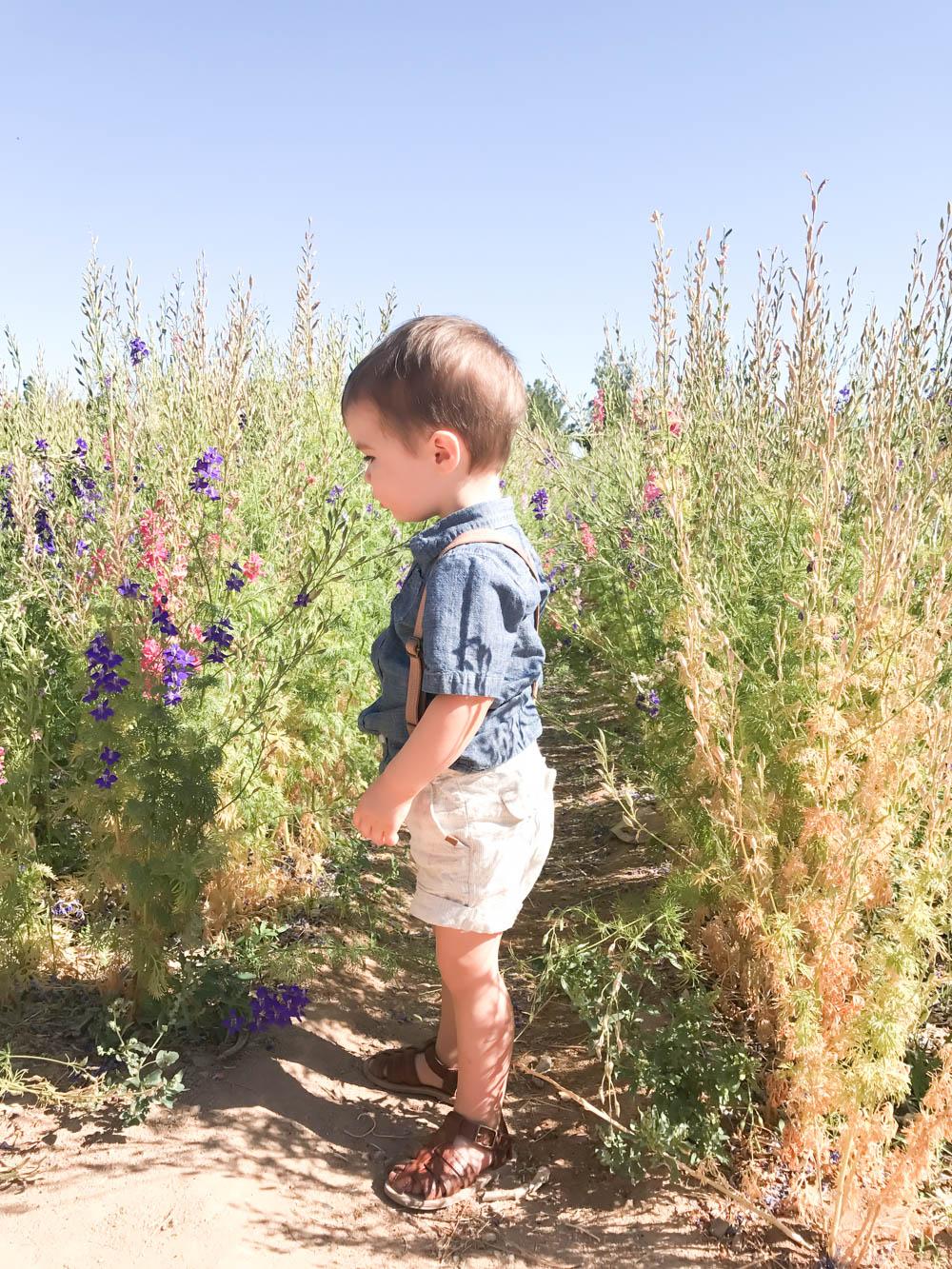 Schnepf Farms Peach Festival | Queen Creek AZ | Mother's Day | Peach Farm