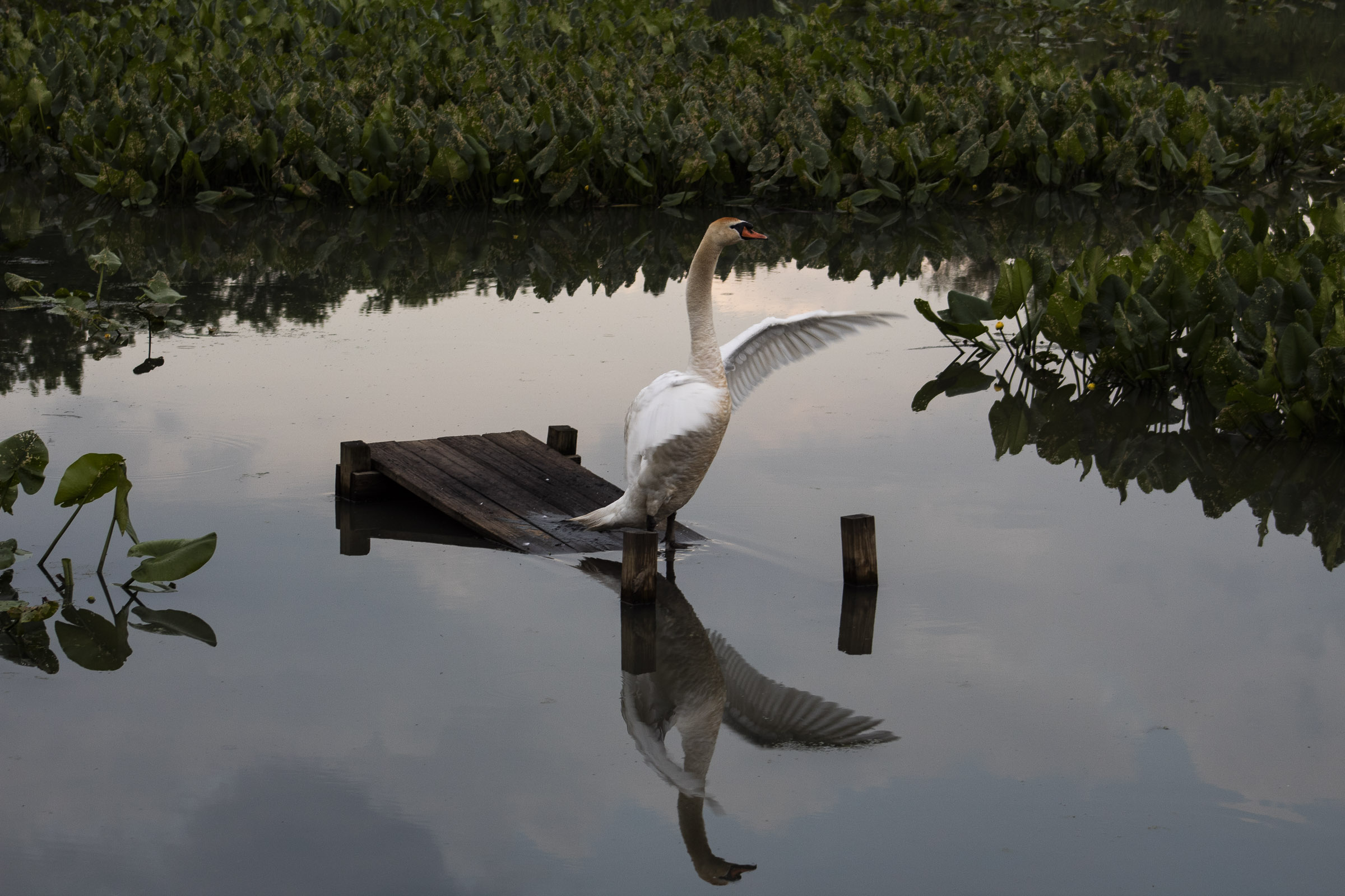 Urban Swan Song.jpg