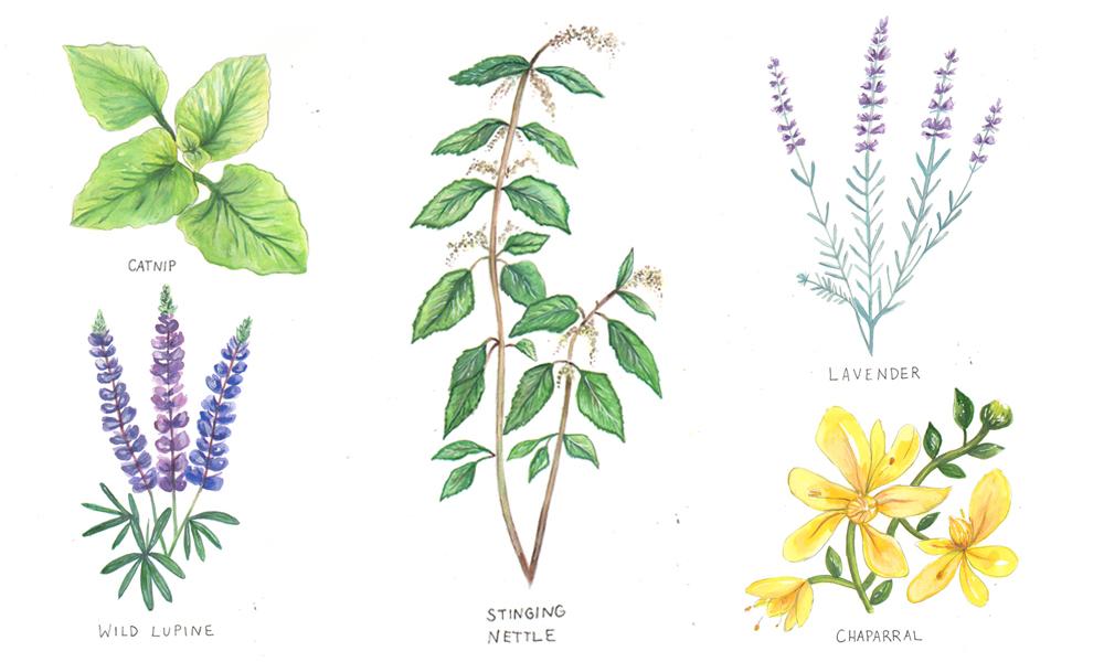 Botanical Illustration for The Glassblock Magazine
