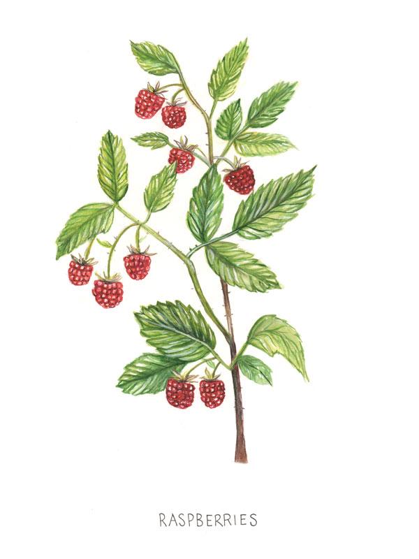 Rasberries-Final-copy.jpg