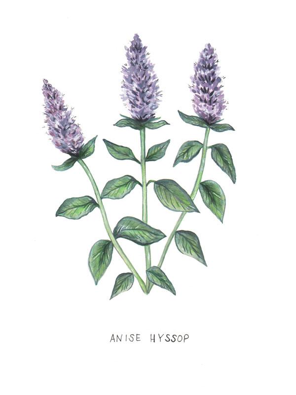 Botanical Illustration fot The Glassblock Magazine