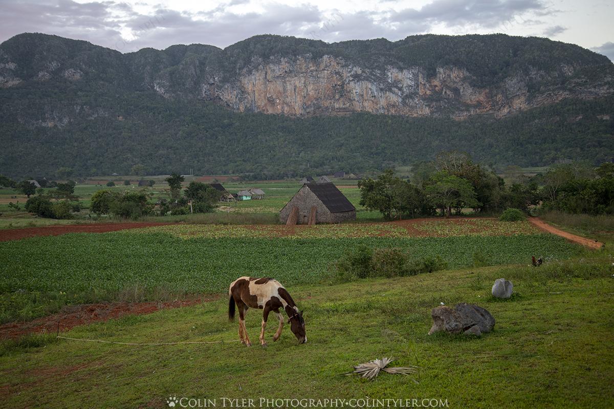 Farm Tour in Viñales