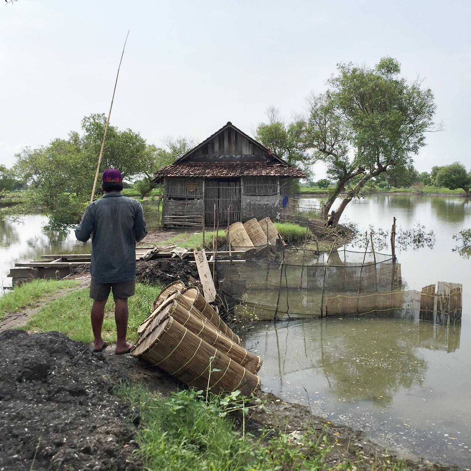 Mangrove-black-tiger-shrimp-farming.jpg