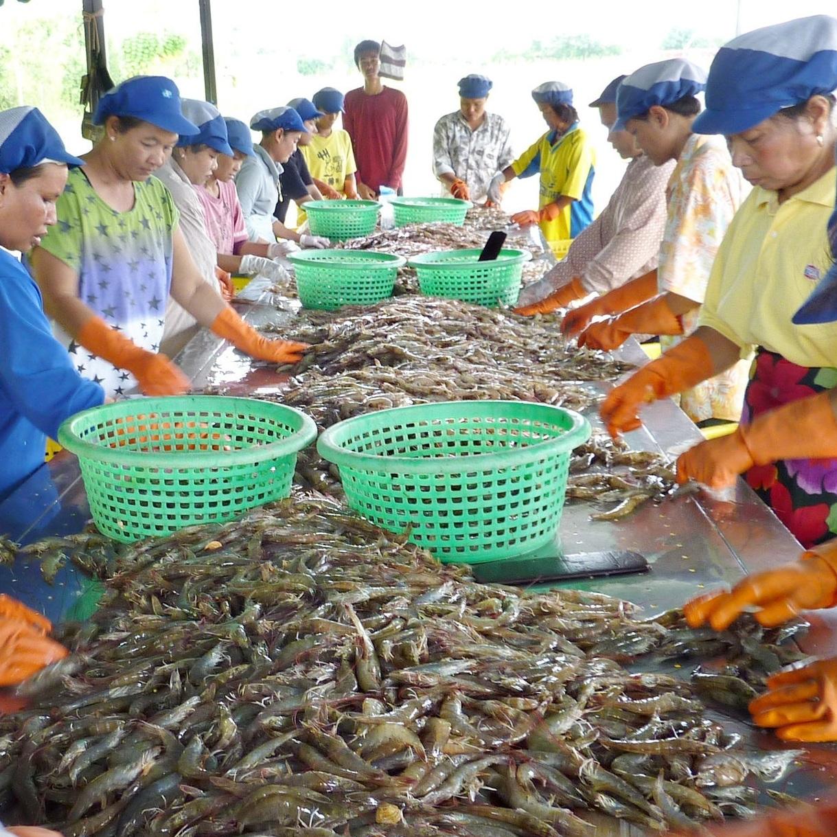 Asian_seafood_processors_sustainable_seafood.jpg