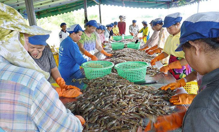 Photo: Asian Seafood Improvement Collaborative