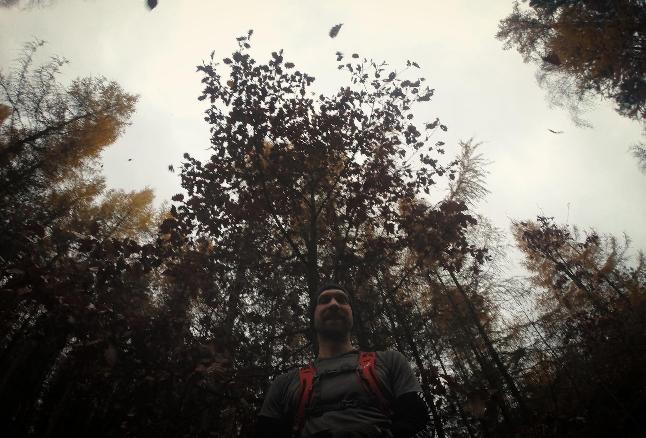 Sněží listí - Postavte se pod strom a pořádně do něj kopnout :)
