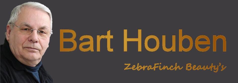 Bart Houben - ZebraFinch Beauty's