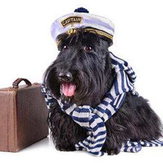 81_chien_voyage_avion__081969000_1748_23012014.jpg