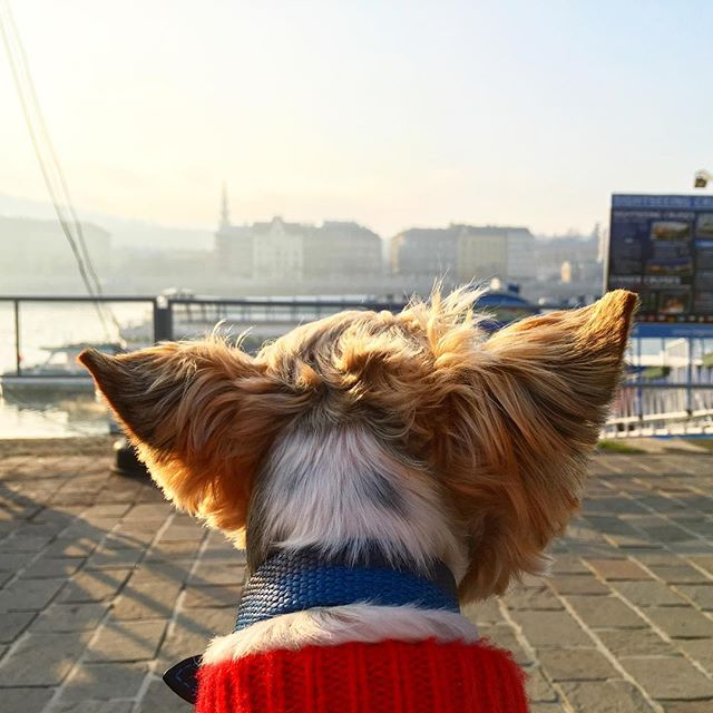 #Budapest through the eyes of Souffle! Read us on the blog next week (link in bio). Love to all of you in the next year! ❤️🐶❤️🐶🎄🍾 #latergram