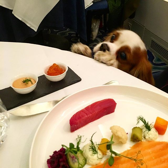 "Look how we celebrated #RussianChristmas at #Petrossian @petrossian_fr best restaurant in Paris for caviar and seafood! An article on our blog very soon, introducing the nee rubric ""Gastronomie"". Tell us how did you celebrate Christmas!?! 😘🐶🍾🎄"