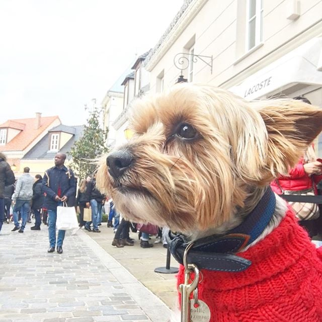 Let us remind you, dear fluffy friends, that this weekend the official French sales go on! And what is the best way of spending it if not at @lavalleevillage in Paris?! Remember that your assistants must carry you to be able to shop - my PA @alisa.volskaya is doing her job! #shopping #paris #france