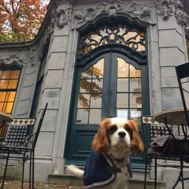 """""""La folie"""" Pavillon  Louis XV . En 1909, un des propriétaires du parc,  Léon Janssen , a fait démonter et reconstruire pierre par pierre dans le parc ce petit édifice du XVIIIe siècle provenant d '  Amsterdam"""