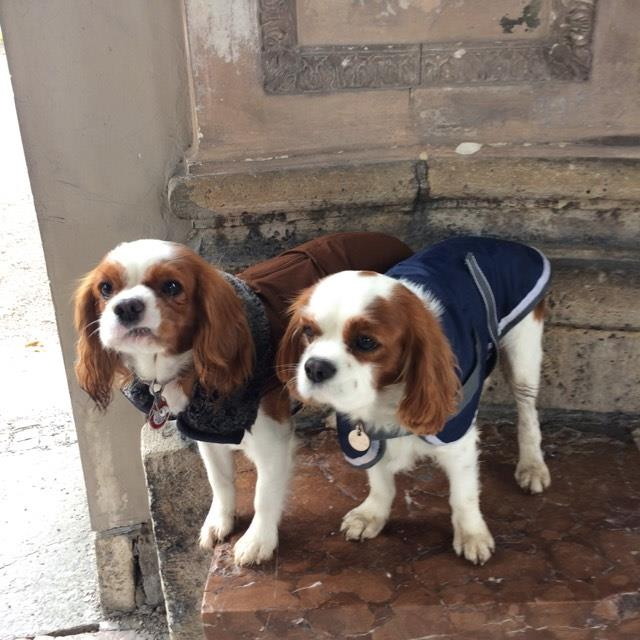 Oscar et sa copine çiko prenant la pose au sein du  pavillon Hofgarten