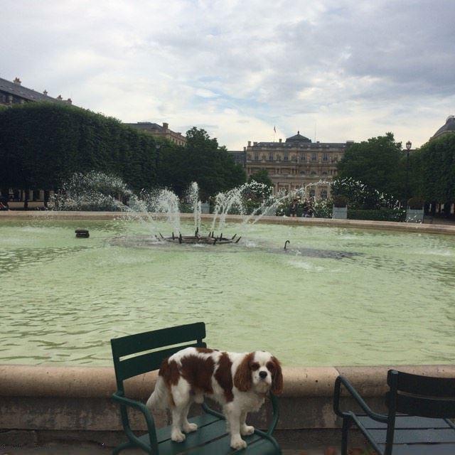 Rien de mieux qu'un bon livre au bord de la fontaine dans  les jardins du Palais Royal , le Spot préféré de  Cocteau ,  Colette  et parisiens d'aujour'hui.