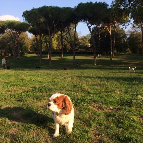 Après une bonne sieste, direction  les jardins de la Villa Borghese !