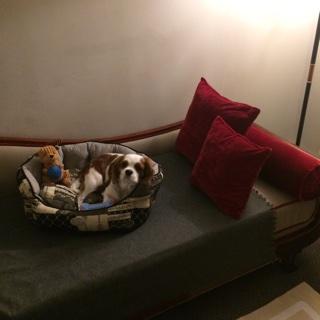 """En + d'un """"VIP pet package"""", Oscar s'est vu réserver sa propre chambre avec balcon attenante à celle de papa :)"""