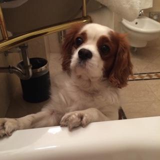 Rien de tel qu'un bon bain moussant  Hermès .