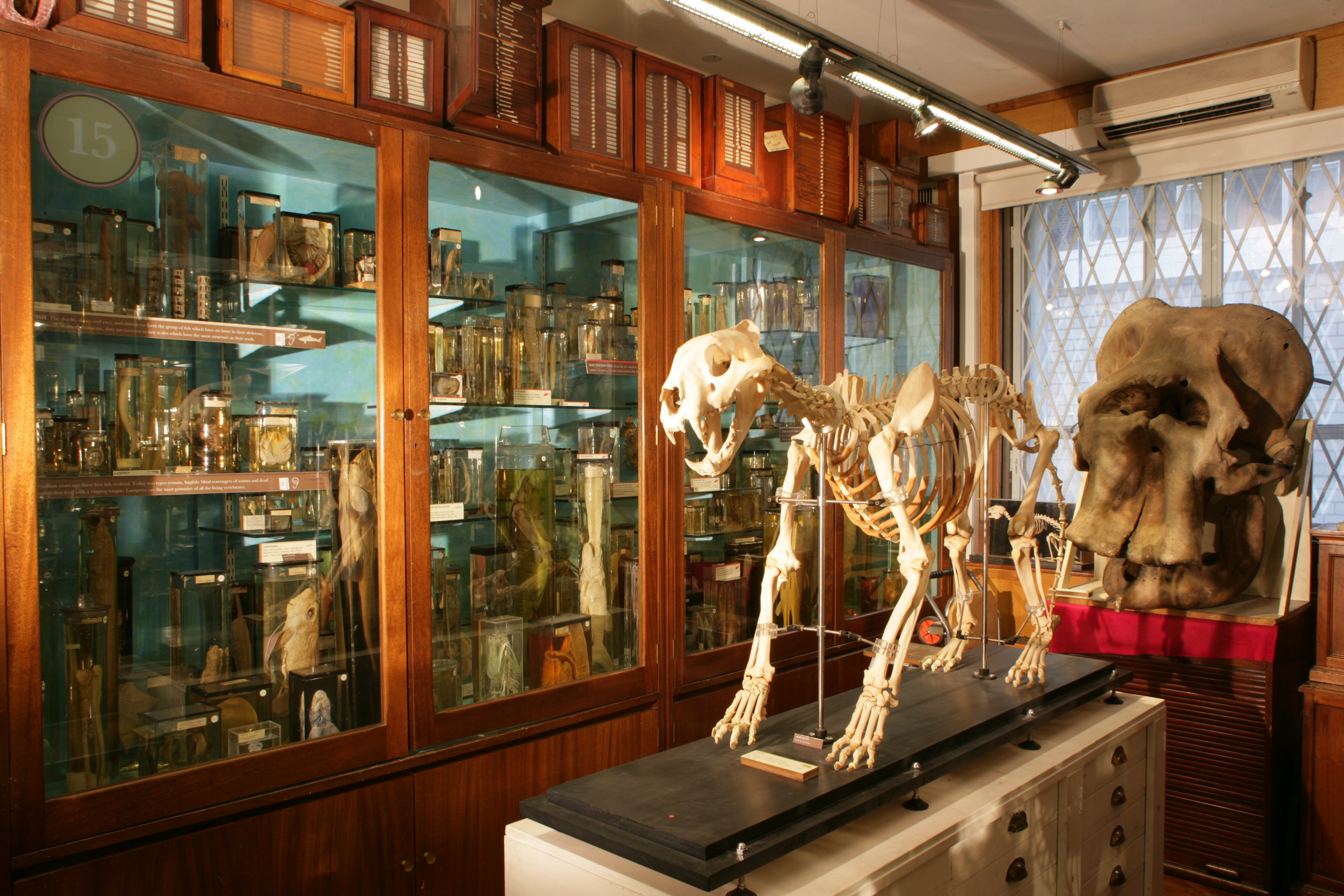 The Grant Museum of Zoology -     soundscape ,  constructed from more than one thousand bat recordings, commissioned by the British Science Association and The Grant Museum of Zoology as part of a collaboration with In The Dark