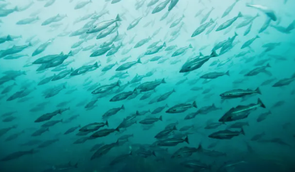 The Guardian - Oceans Of Noise.   Three part series telling stories from the sonic world under the Ocean surface and revealing a new threat to the world's largest natural environment