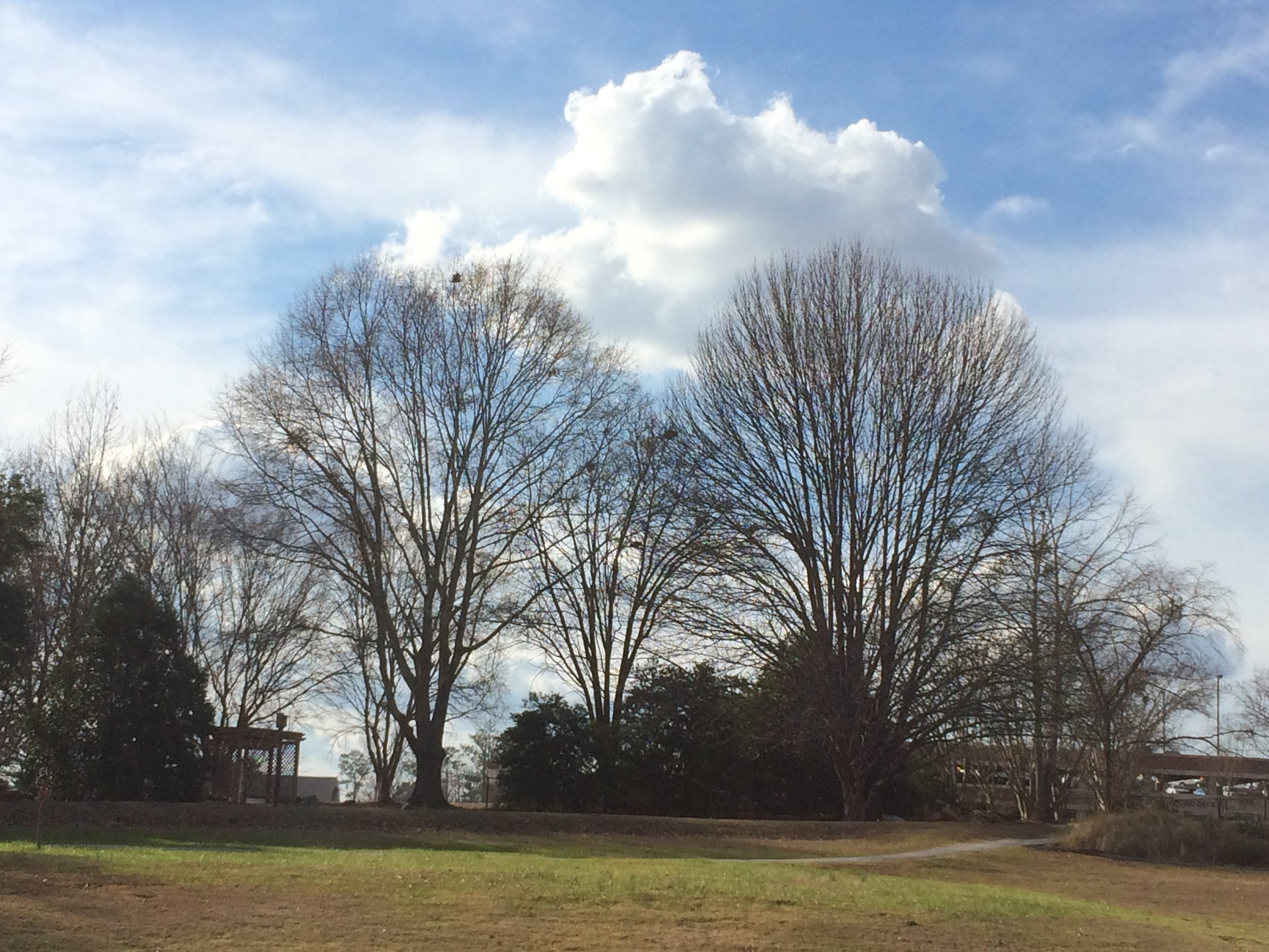 This area features many public parks to walk in. This is at the Donald E. Davis Arboretum at Auburn University.