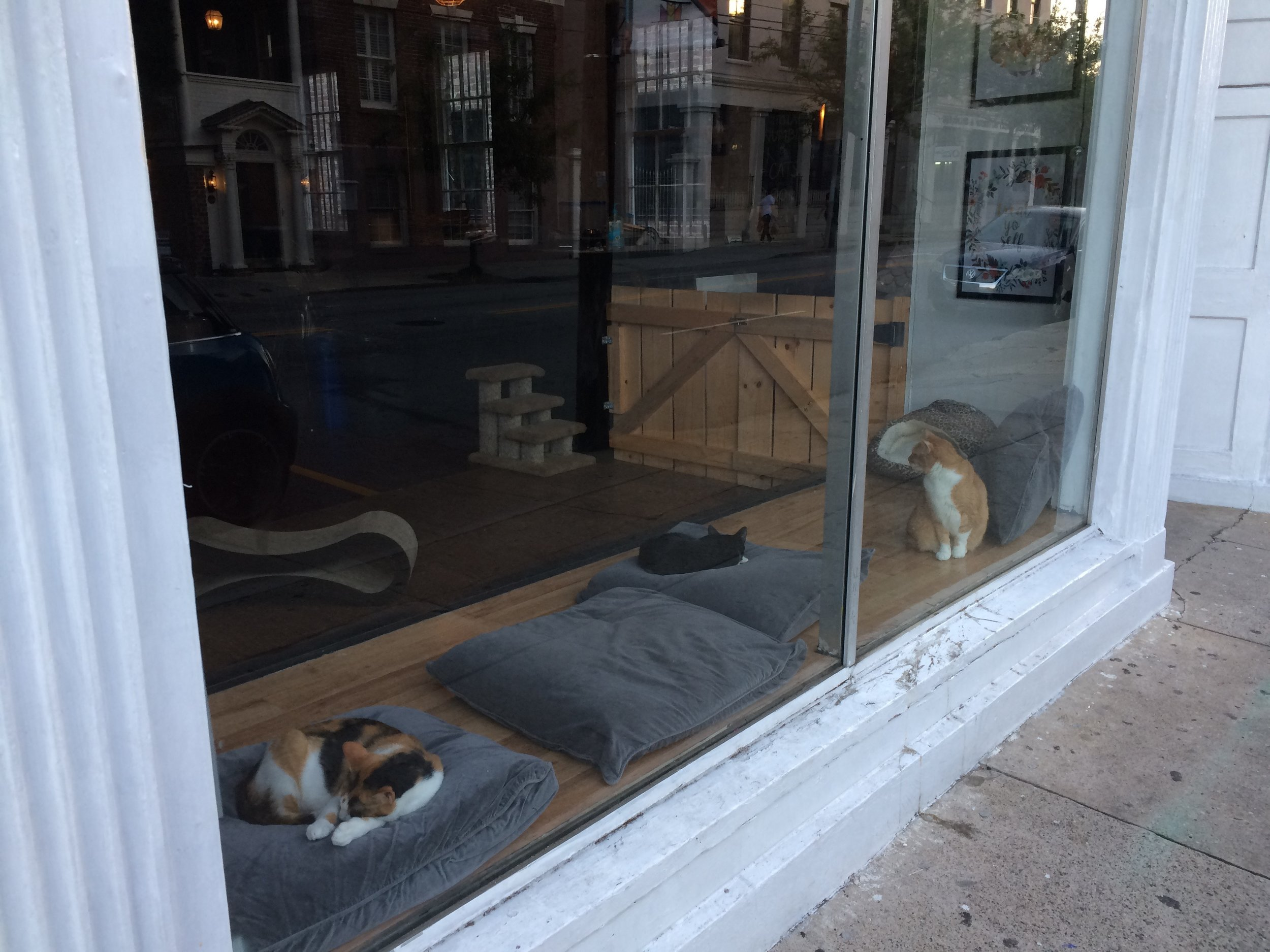 When we walked past it on the way back to our apartment, one of the kitties ran up to the window and greeted us. I think they must be lonesome when the cafe is closed.