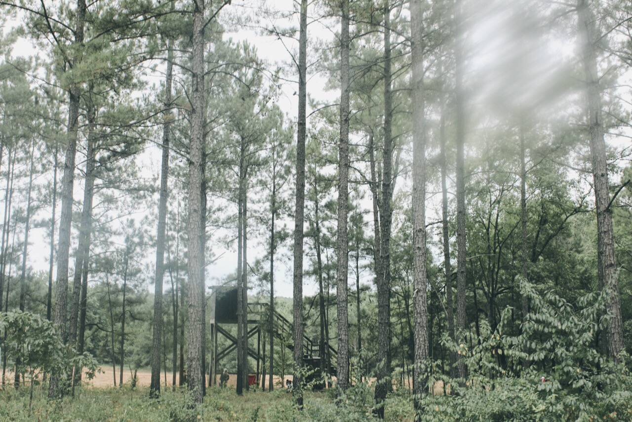stand in the woods