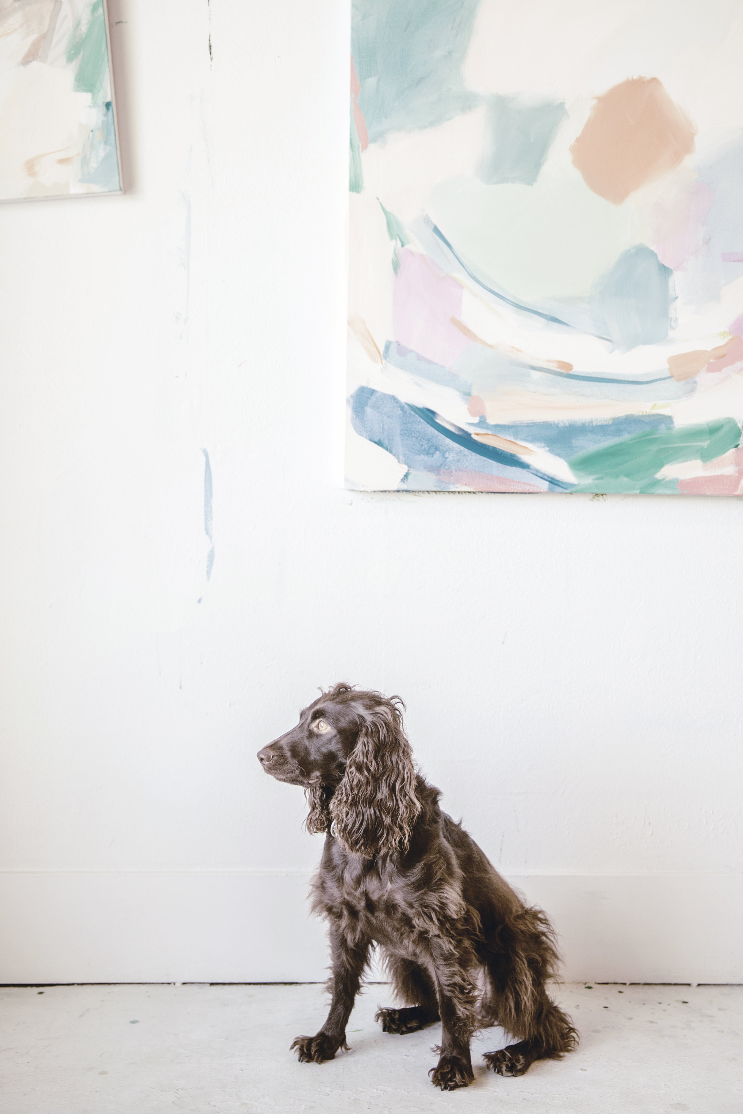 Her dog and studio companion, Birdie.