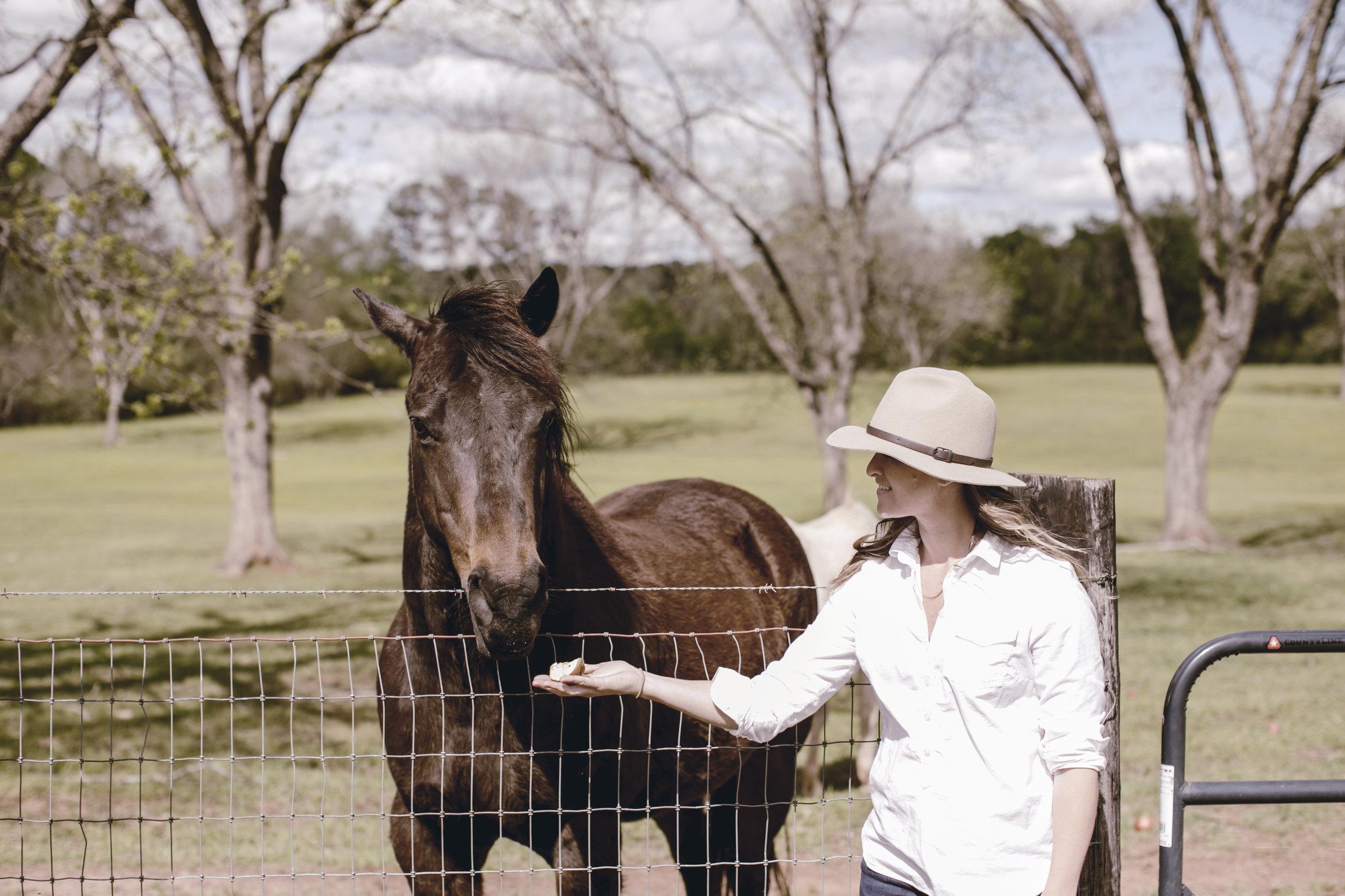 black horse at the farm / heirloomed